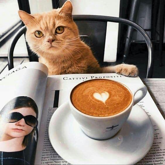 Café น่ารัก บรรยากาศดีที่คนมีสัตว์เลี้ยงสามารถพาน้อง ๆ เข้าไปได้